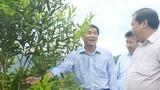 """Bày cách cho người dân huyện nghèo trồng cây """"tỷ đô"""""""