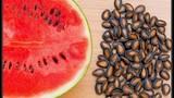 Điều gì xảy ra với cơ thể nếu bạn ăn hạt dưa hấu?