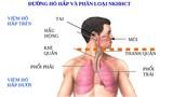 Bộ phận cơ thể nào bị thuốc lá tàn phá mạnh nhất?