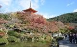 Ngắm ngôi chùa nổi tiếng nhất tại cố đô Kyoto