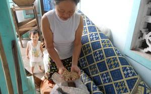 Hà Tĩnh: Ép dân trồng giống mới, mất mùa…đổ vạ cho dân