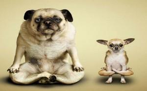 Video: Mãn nhãn màn tập yoga cùng một chú chó