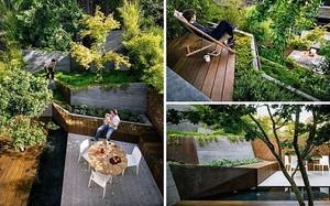 Sân trống sau nhà được cải tạo thành vườn bậc thang đẹp không thể rời mắt