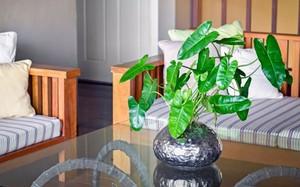 Những loại cây tốt cho sức khỏe nên trồng trong nhà