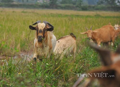 Vua de nui Ninh Binh ke chuyen