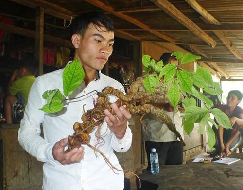 Sam Ngoc Linh 100 tuoi: 4 dai gia chong tien ty khong mua noi-Hinh-2
