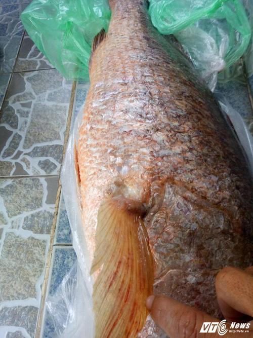Cau duoc ca nang 7 kg nghi la ca su vang o Vung Tau