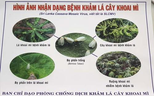 Benh la va nguy hiem: Kham la mi lay lan chong mat o Tay Ninh