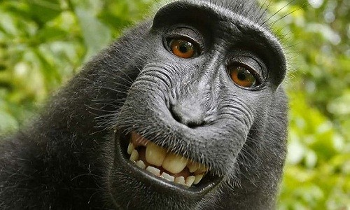 "Nguoi dung sau buc anh ""con khi selfie"" khanh kiet vi kien tung"