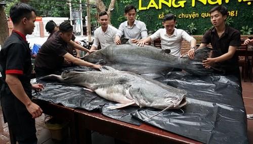 """Mam co cung Ram thang 7 vai trieu, nhau """"thuy quai"""" 200kg-Hinh-4"""