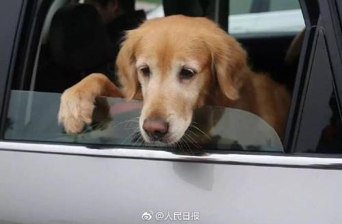 Bang hanh dong cua minh, chu cho khien bao con nguoi phai xau ho-Hinh-4