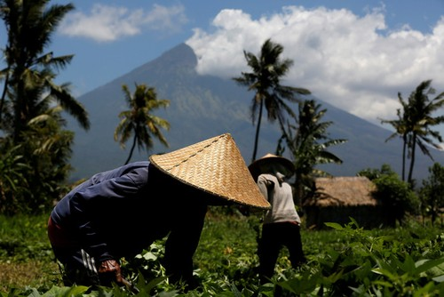 Bali hoi hop cho nui lua phun trao-Hinh-9