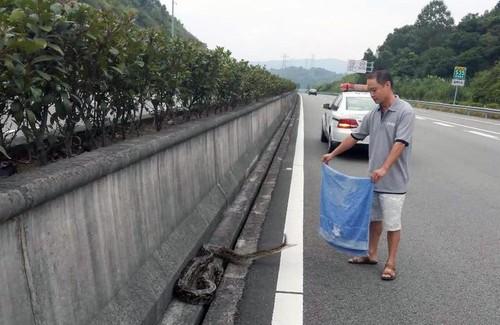 Bo ngang duong bi xe can, tran khong lo con hung hang lam dieu nay-Hinh-4