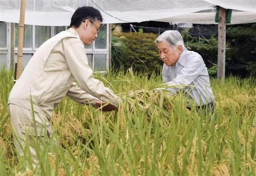 """Nhat hoang Akihito: """"Gan gui voi dan trong tung nep nghi""""-Hinh-2"""