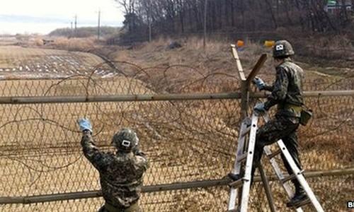 Park Mee-ja: Co thu vi it nguoi biet ve khu phi quan su (DMZ)