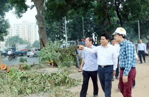 Chu tich Ha Noi kiem tra dot xuat cay xanh duong Pham Van Dong