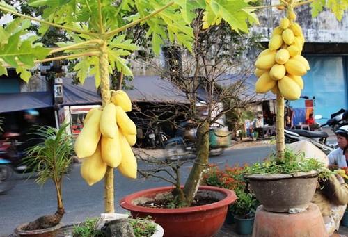 10 loai cay an qua cuc hop trong chau bonsai-Hinh-3