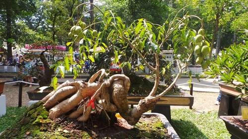 10 loai cay an qua cuc hop trong chau bonsai-Hinh-6