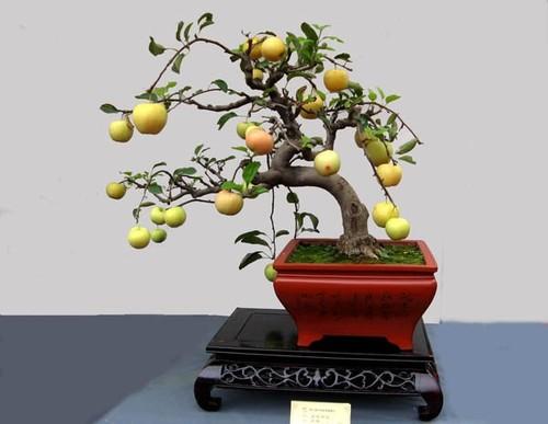 10 loai cay an qua cuc hop trong chau bonsai
