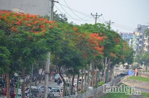 Pho phuong Ha Noi mong mo phuong do, vuong van diep vang-Hinh-14