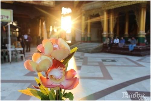 Don binh minh tai ngoi chua thieng nhat Myanmar-Hinh-2