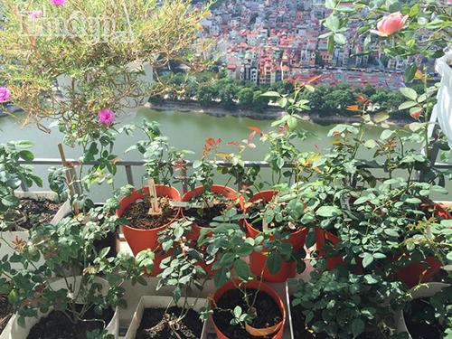 Ban cong von ven 3m2 trong 100 goc hoa hong dep quen sau-Hinh-14