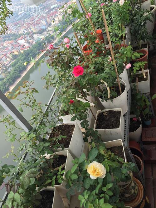 Ban cong von ven 3m2 trong 100 goc hoa hong dep quen sau-Hinh-3