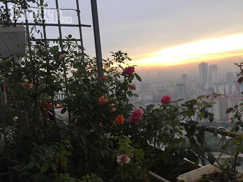 Ban cong von ven 3m2 trong 100 goc hoa hong dep quen sau-Hinh-5