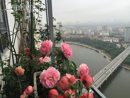 Ban cong von ven 3m2 trong 100 goc hoa hong dep quen sau-Hinh-6
