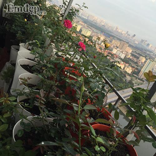 Ban cong von ven 3m2 trong 100 goc hoa hong dep quen sau-Hinh-9