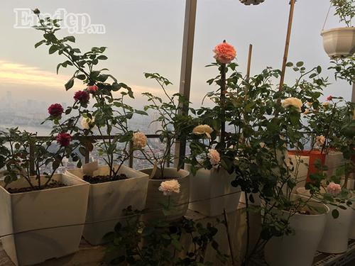 Ban cong von ven 3m2 trong 100 goc hoa hong dep quen sau