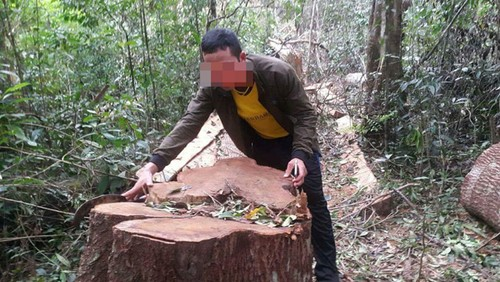 """Tham nhap rung Kbang: Tan thay go khong lo bi """"xe thit""""-Hinh-8"""
