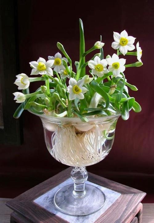 5 loại hoa đẹp lại dễ sống nên trồng ngay để kịp chơi Tết - Ảnh 3.