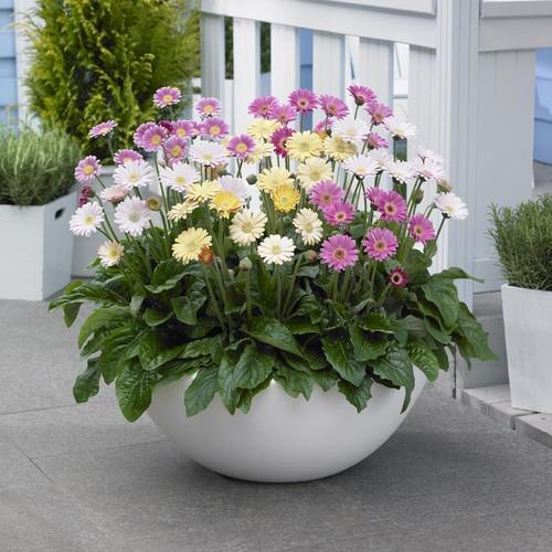 5 loại hoa đẹp lại dễ sống nên trồng ngay để kịp chơi Tết - Ảnh 5.