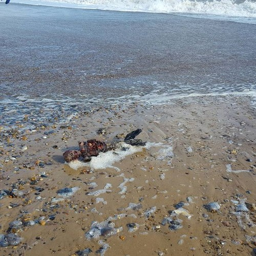Rotting body of 'dead mermaid' washes up on British beach