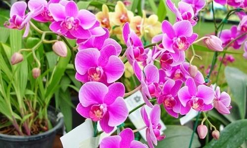 Nhung loai hoa cho dan cong so trang tri ban de gap may-Hinh-2
