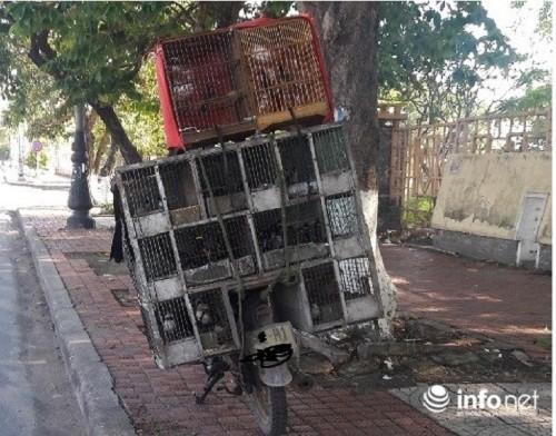 "Nghe ""tan diet chim rung"": La lung chuyen mua chim tren cay-Hinh-2"