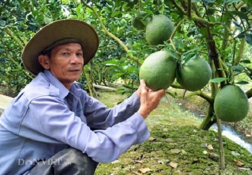 """Phuc lan: Xay duoc """"biet phu"""" tu trong buoi da xanh-Hinh-5"""
