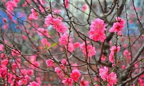 Nhung loai hoa nhat dinh phai co trong nha ngay tet de chieu tai loc