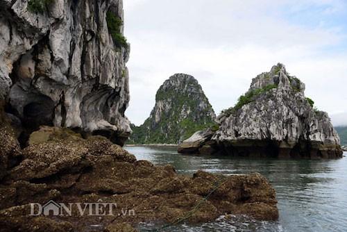 Tan mat thay cao thu san con cu ky nuc tieng Bai Tu Long-Hinh-4