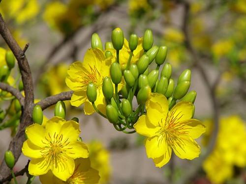 Nhung loai hoa cau tai nhat dinh phai co trong nha ngay Tet-Hinh-2