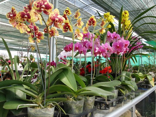 Nhung loai hoa cau tai nhat dinh phai co trong nha ngay Tet-Hinh-4