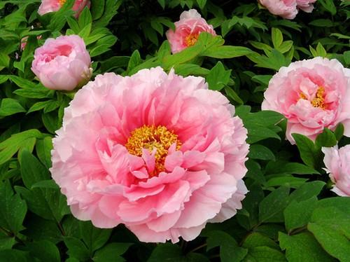 Nhung loai hoa cau tai nhat dinh phai co trong nha ngay Tet-Hinh-7