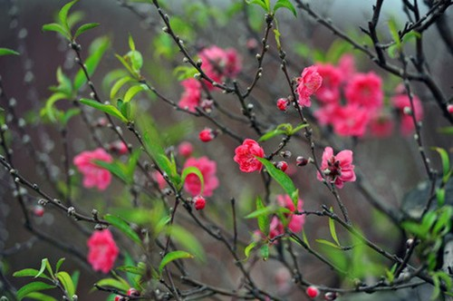 Nhung loai hoa cau tai nhat dinh phai co trong nha ngay Tet
