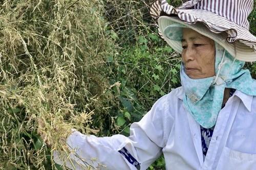 Bui hoa tre to nhu u rom chua tung thay o Quang Ngai-Hinh-4