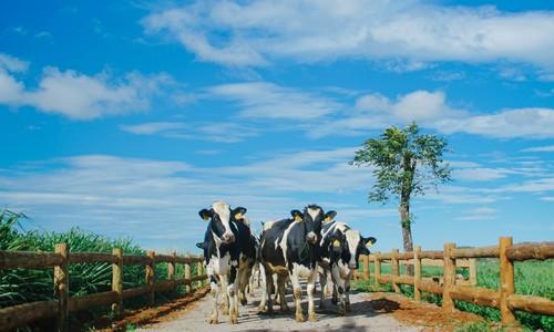 Tham gia Vinamilk Organic Farm tour cung gia dinh Hoang Bach-Hinh-4