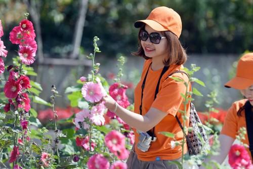 Len Sun World Fansipan Legend ngam rung hoa mua ha khoe sac-Hinh-3