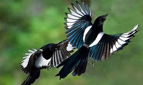 Giai ma diem bao khi chim bay, ran bo vao nha