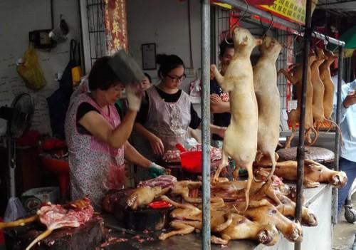 Le hoi thit cho Ngoc Lam van dien ra bat chap tin don cam ban-Hinh-8