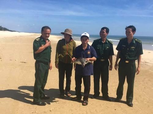 Quang Tri: Giai cuu mot con vich nang 15kg sap len ban nhau-Hinh-3